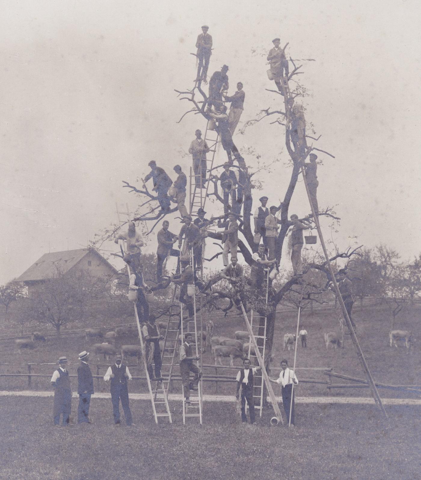 Baumschule_Flawil_1919_Staatsarchiv
